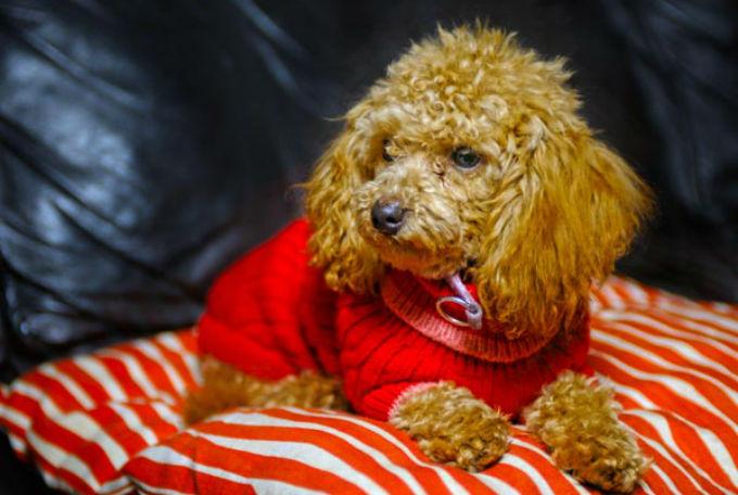 7 Dog Breeds For Older People