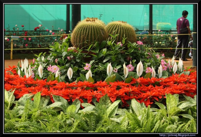 Lalbagh Flower Show Bangalore 2013
