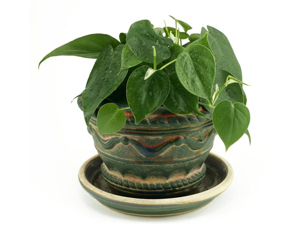 Small Indoor Plants To Decorate House Photos Pics 230291