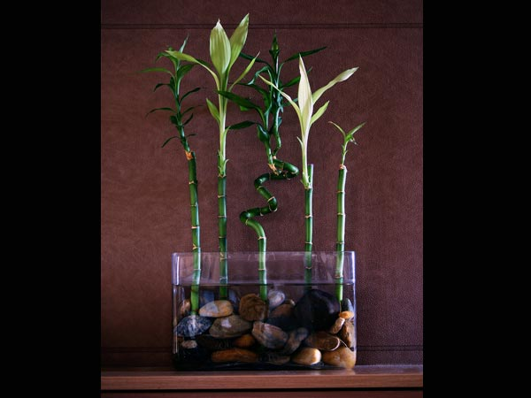Small indoor plants to decorate house photos pics 230296 boldsky gallery boldsky gallery - How to decorate your house ...