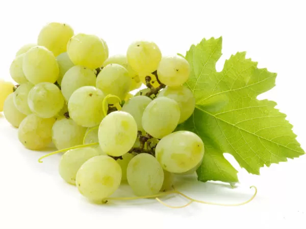 health benefits of grapes pdf