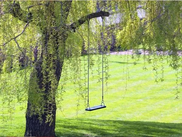 Shade indian trees for summer garden photos pics 233176 for Garden trees photos