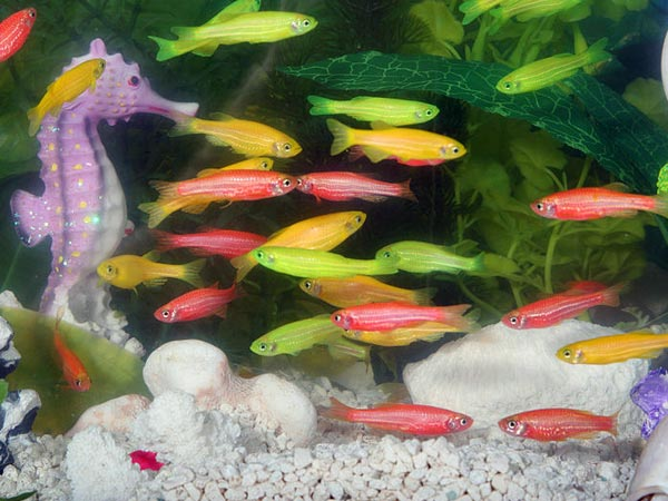 Types Of Aquarium Fish For Good Luck Photos
