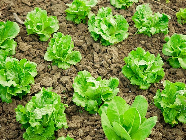 Vegetables To Grow In Winter Garden