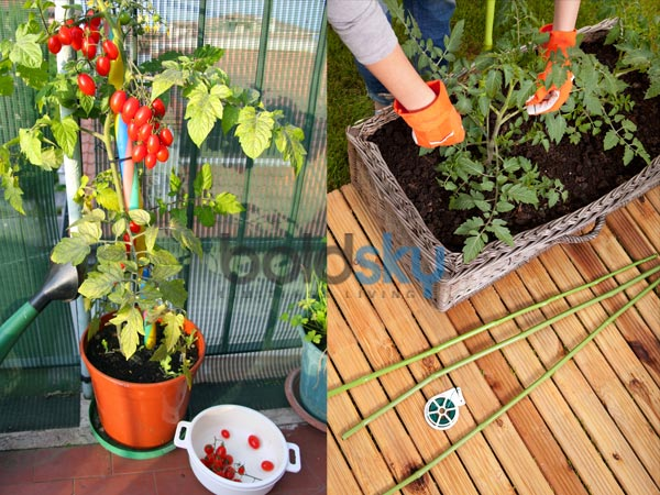 Pot Vegetables To Grow This Summer
