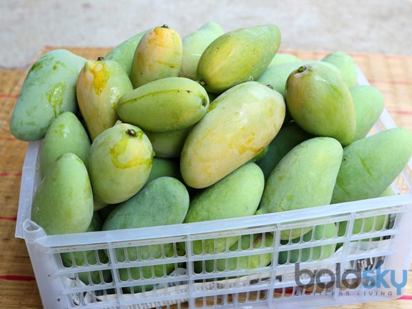 Easy Ways To Ripen Green Mangoes At Home