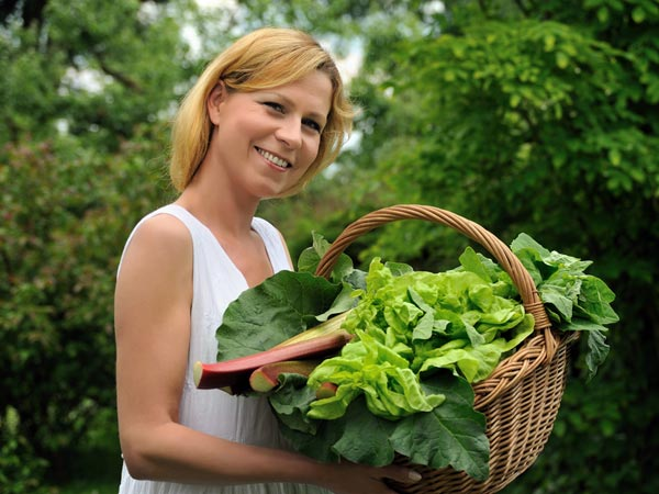 Four Steps To Grow Green Spinach At Home