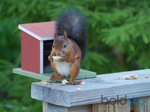 Ways To Prevent Squirrels From Eating Your Garden