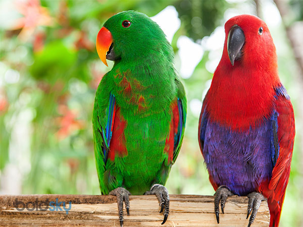 The Best Talking Pet Birds For Pet Lovers