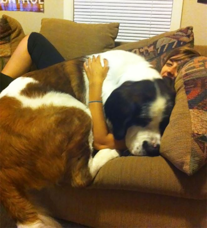 LARGE Dogs That Still Think They're Lap Dogs